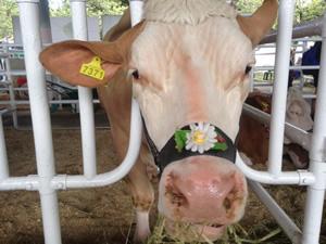 agro-2016_cattle